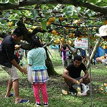 采摘水果(梨、葡萄)